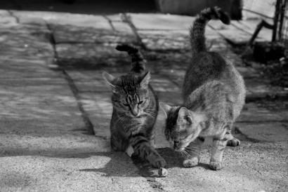 doua pisici curioase